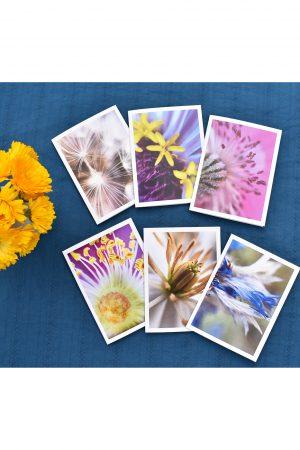 Garden Universe Art Card Set