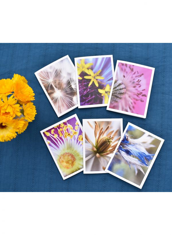 6 macro flower photos on greeting cards displayed on a blue tablecloth with calendula flowers.