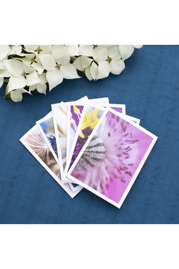 set of 6 cards with flower macro photography fanned out on a blue background with white dogwood flowers in the background