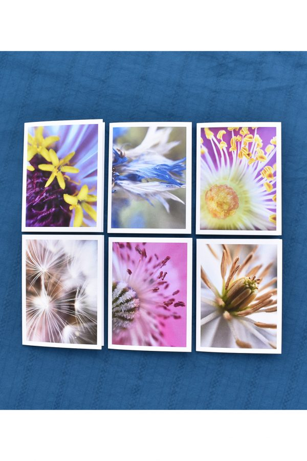 6 cards of close up images of flowers all in a grid on a blue background