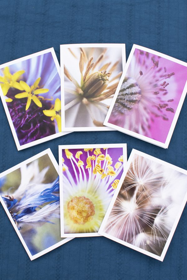 greeting card set of 6 displayed showing close up macro photo images of beautiful flowers.
