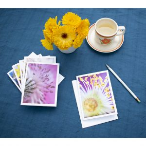 macro flower photo art card set fanned out on table with calendula flowers, tea and a pencil, all ready to write.