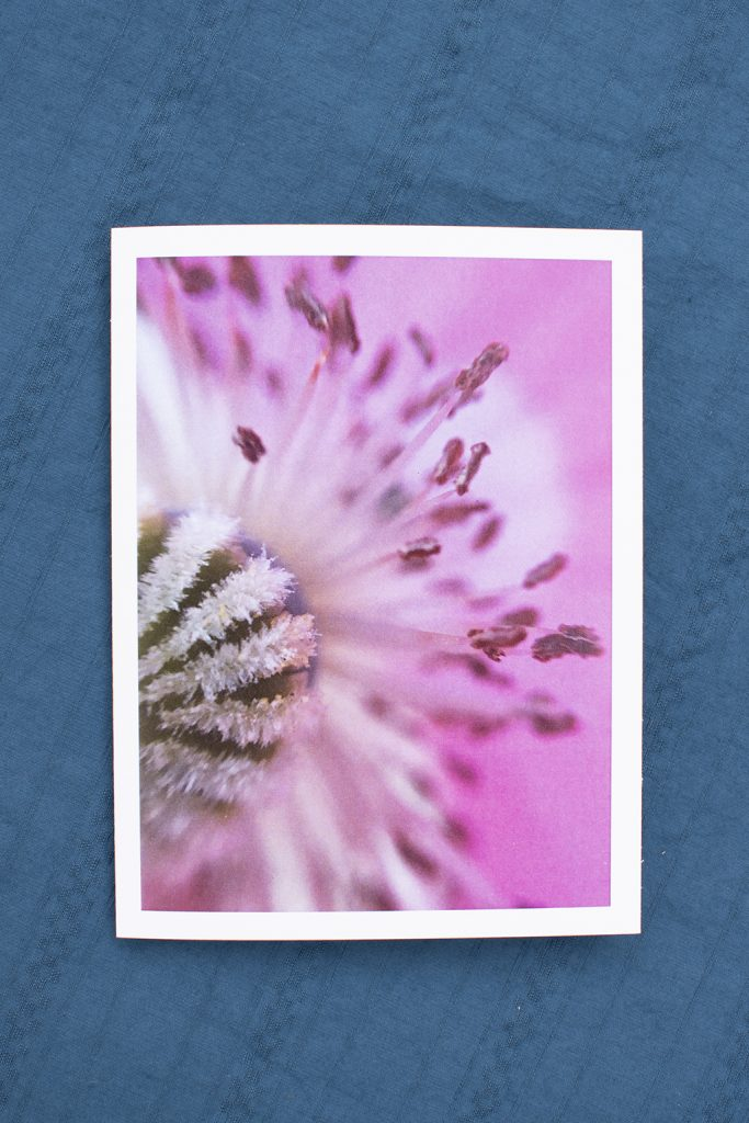 image of the front of a greeting card with a close up of a pink poppy and a white border.